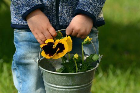 Programacion Didactica Sobre La Primavera Las Flores Actividades