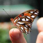 Cómo fomentar  el autocontrol de la conducta impulsiva en el aula a través de la  técnica del vuelo de la mariposa.