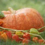 Aprendemos los colores aprovechando frutos que la naturaleza nos ofrece en otoño