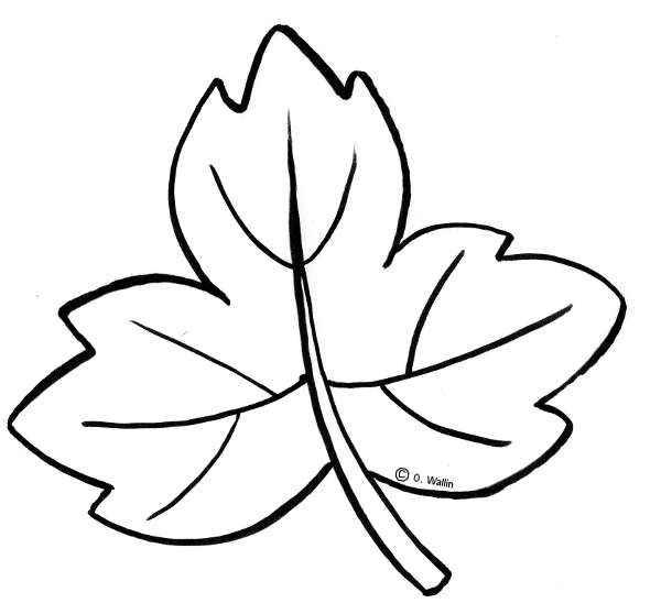 Dibujos de hojas de oto o actividades infantil - Hojas de otono para decorar ...