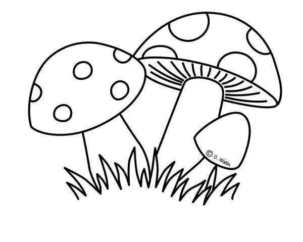 Dibujos Para Colorear De Frutos Del Otoño Actividades Infantil