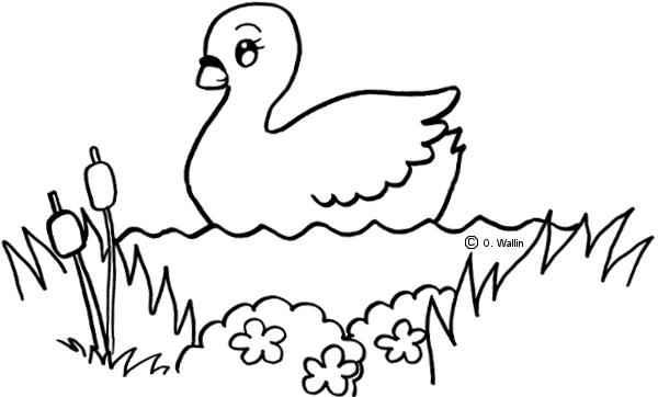 Dibujos De Cisnes Para Colorear Actividades Infantil
