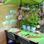 El rincón de la naturaleza en la clase de educación infantil